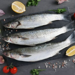 Parshey / Shoroda/ Grey Mullet - (4 -7 count)
